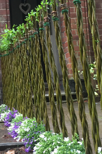 Willow Wand | Gifts for Gardeners Designer Willow Plant | Wand Fence