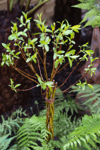 Willow Wand | Gifts for Gardeners Designer Willow Plant | Wand and ferns